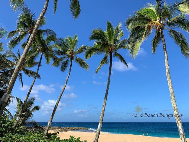 """""""All is calm, all is bright' 🌴 Just another beautiful afternoon at Ke Iki Beach Bungalows  . . #keikibeachbungalows #keikibeach #northshoreoahu #northshore #pupukea #oahu #hawaii #hawaiilife #luckywelivehawaii #luckywelivehi #instahawaii #hawaiiunchained #808 #808life #808state #beachfront #hawaiiantropic #beachbungalow #endlesssummer #islandlife #islandliving #aloha #livealoha #alohastate #alohavibes #alohastateofmind"""