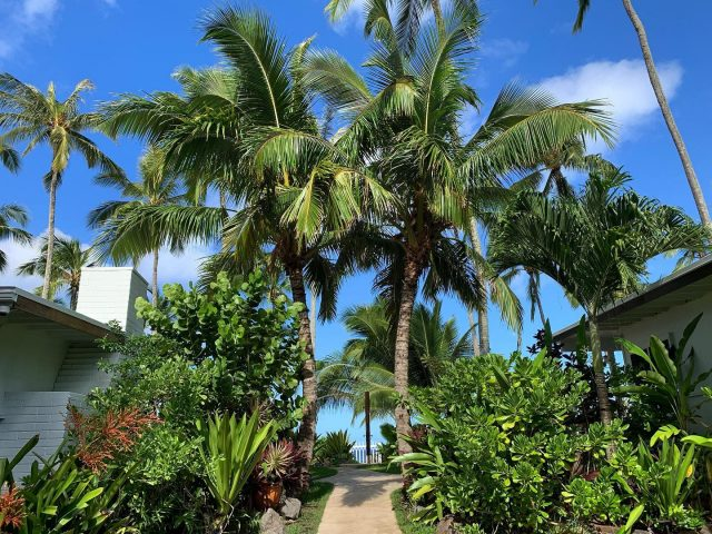 Make this scene a part of your New Year goals for 2021 🌴😎 Call 1-866-638-8229 to book . . #keikibeachbungalows #keikibeach #northshoreoahu #northshore #pupukea #oahu #hawaii #hawaiilife #luckywelivehawaii #luckywelivehi #instahawaii #hawaiiunchained #808 #808life #808state #beachfront #hawaiiantropic #beachbungalow #endlesssummer #islandlife #islandliving #aloha #livealoha #alohastate #alohavibes #alohastateofmind