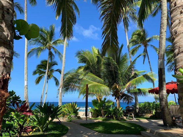 Join us under the palms 🌴 Call 808-638-8229 to book your dates for this coming spring . . #keikibeachbungalows #keikibeach #northshoreoahu #northshore #pupukea #oahu #hawaii #hawaiilife #luckywelivehawaii #luckywelivehi #instahawaii #hawaiiunchained #808 #808life #808state #beachfront #hawaiiantropic #beachbungalow #endlesssummer #islandlife #islandliving #aloha #livealoha #alohastate #alohavibes #alohastateofmind