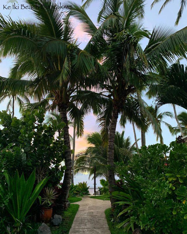 When do you plan on returning to paradise? 🌴 . . #keikibeachbungalows #keikibeach #northshoreoahu #northshore #pupukea #oahu #hawaii #hawaiilife #luckywelivehawaii #luckywelivehi #instahawaii #hawaiiunchained #808 #808life #808state #beachfront #hawaiiantropic #beachbungalow #endlesssummer #islandlife #islandliving #aloha #livealoha #alohastate #alohavibes #alohastateofmind