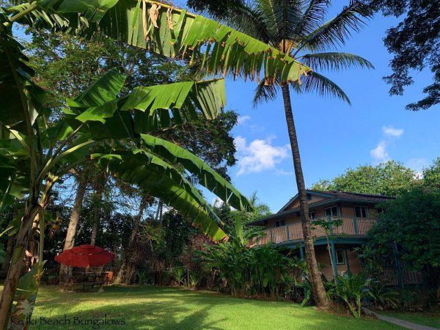 Sundays...in the garden 🌴 Call 808-638-8229 to book you bungalow 🌺 . . #keikibeachbungalows #keikibeach #northshoreoahu #northshore #pupukea #oahu #hawaii #hawaiilife #luckywelivehawaii #luckywelivehi #instahawaii #hawaiiunchained #808 #808life #808state #palmtrees #hawaiiantropic #beachbungalow #endlesssummer #islandlife #islandliving #aloha #livealoha #alohastate #alohavibes #alohastateofmind