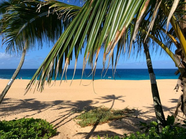 A feeling so close, that you could reach out and touch it 🌴 Let's make it happen...call 808-638-8229 ☀️ALOHA☀️ . . #keikibeachbungalows #keikibeach #northshoreoahu #northshore #pupukea #oahu #hawaii #hawaiilife #luckywelivehawaii #luckywelivehi #instahawaii #hawaiiunchained #808 #808life #808state #palmtrees #hawaiiantropic #beachbungalow #endlesssummer #islandlife #islandliving #aloha #livealoha #alohastate #alohavibes #alohastateofmind