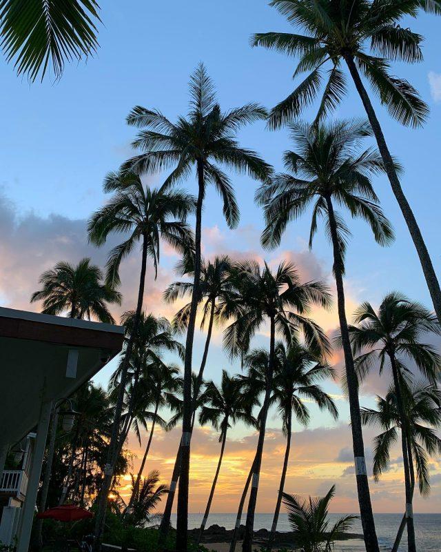 Our wonderfully obstructed view of the sunset 🌴🌅🌴 . . #keikibeachbungalows #keikibeach #northshoreoahu #northshore #pupukea #oahu #hawaii #hawaiilife #luckywelivehawaii #luckywelivehi #instahawaii #hawaiiunchained #808 #808life #808state #hawaiiansunset #hawaiisunset #beachbungalow #endlesssummer #islandlife #islandliving #aloha #livealoha #alohastate #alohavibes #alohastateofmind