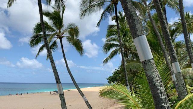 Just another splendid Saturday afternoon at Ke Iki 🌴  . . #keikibeachbungalows #keikibeach #northshoreoahu #northshore #pupukea #oahu #hawaii #hawaiilife #luckywelivehawaii #luckywelivehi #instahawaii #hawaiiunchained #808 #808life #808state #palmtrees #hawaiiantropic #beachbungalow #endlesssummer #islandlife #islandliving #aloha #livealoha #alohastate #alohavibes #alohastateofmind